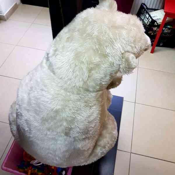 Medved-polarni-3