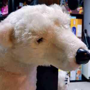 Medved polarni (6)||Medved polarni (1)||Medved polarni (3)||Medved polarni (4)||Medved polarni (5)||Medved polarni||Medved polarni (2)