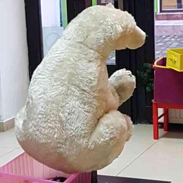 Medved-polarni