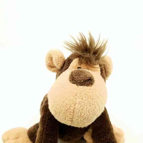 Majmun Nici (3)