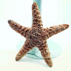 Figura Morska zvezda (1)